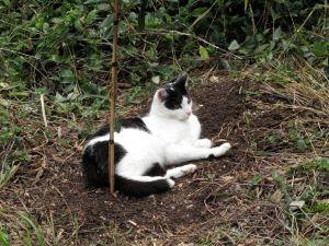 homer at feijoa tree