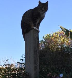 Leo on gatepost