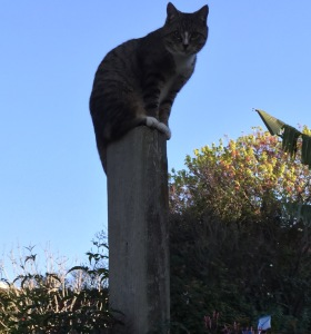 Leo on gatepost