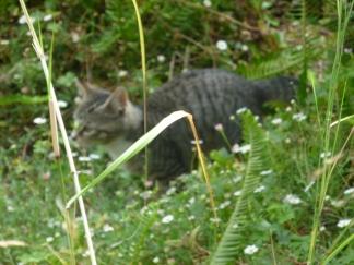 leo-in-grass