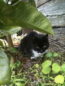 Felix on flowerbed